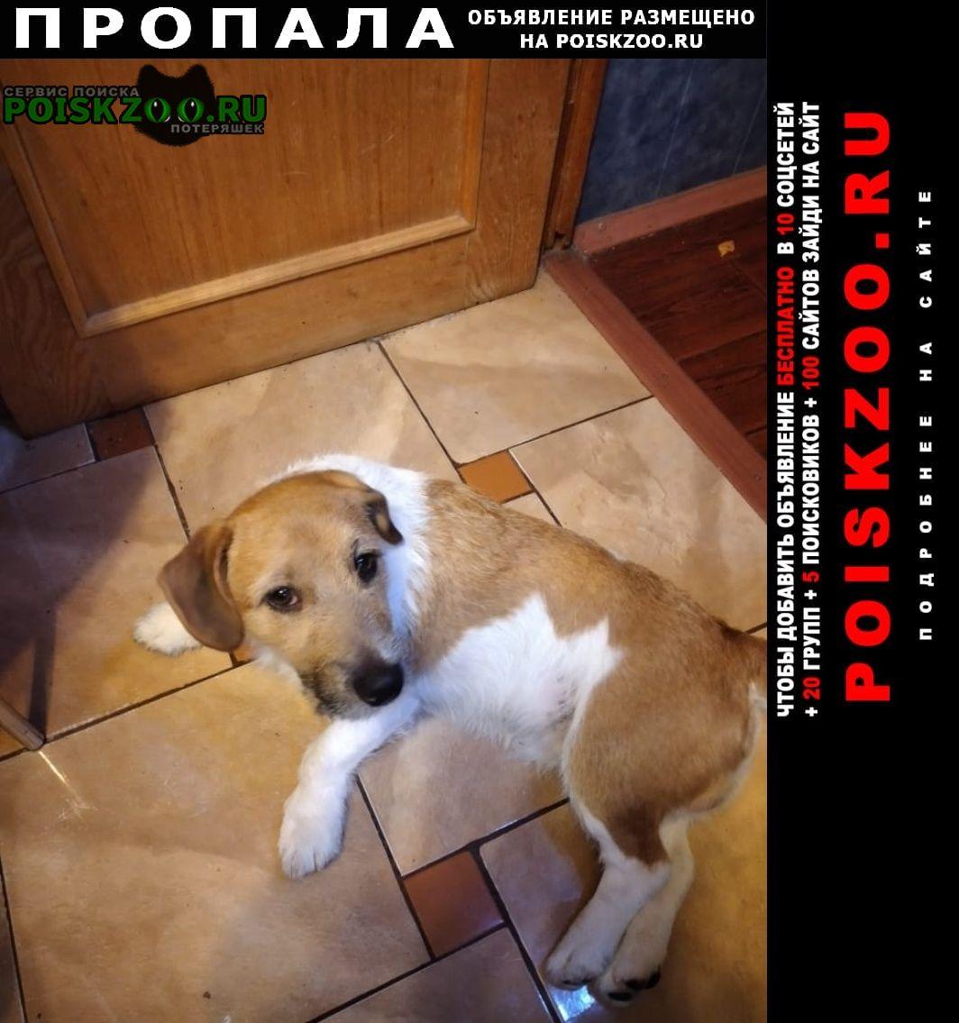 Пропала собака Зарайск