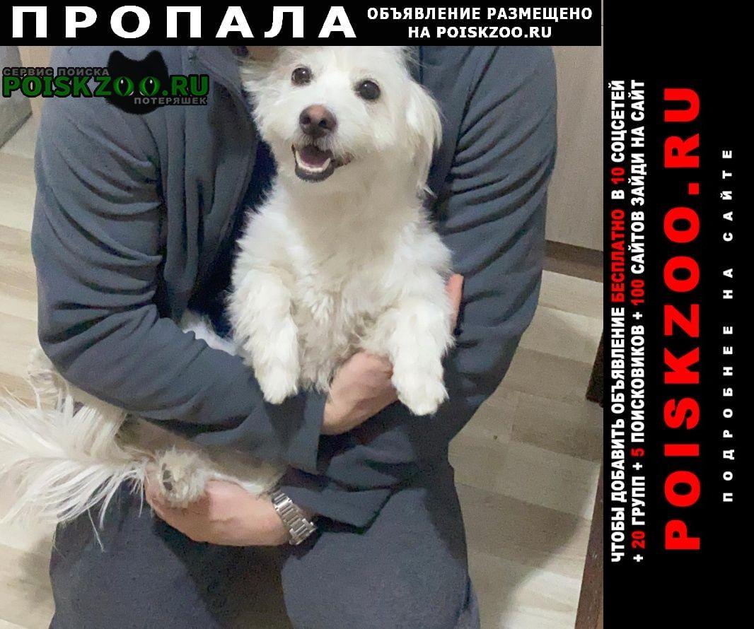 Пропала собака белая, маленькая Сорочинск