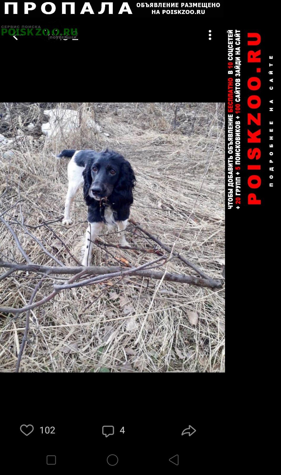 Пропала собака спаниэль Смоленск