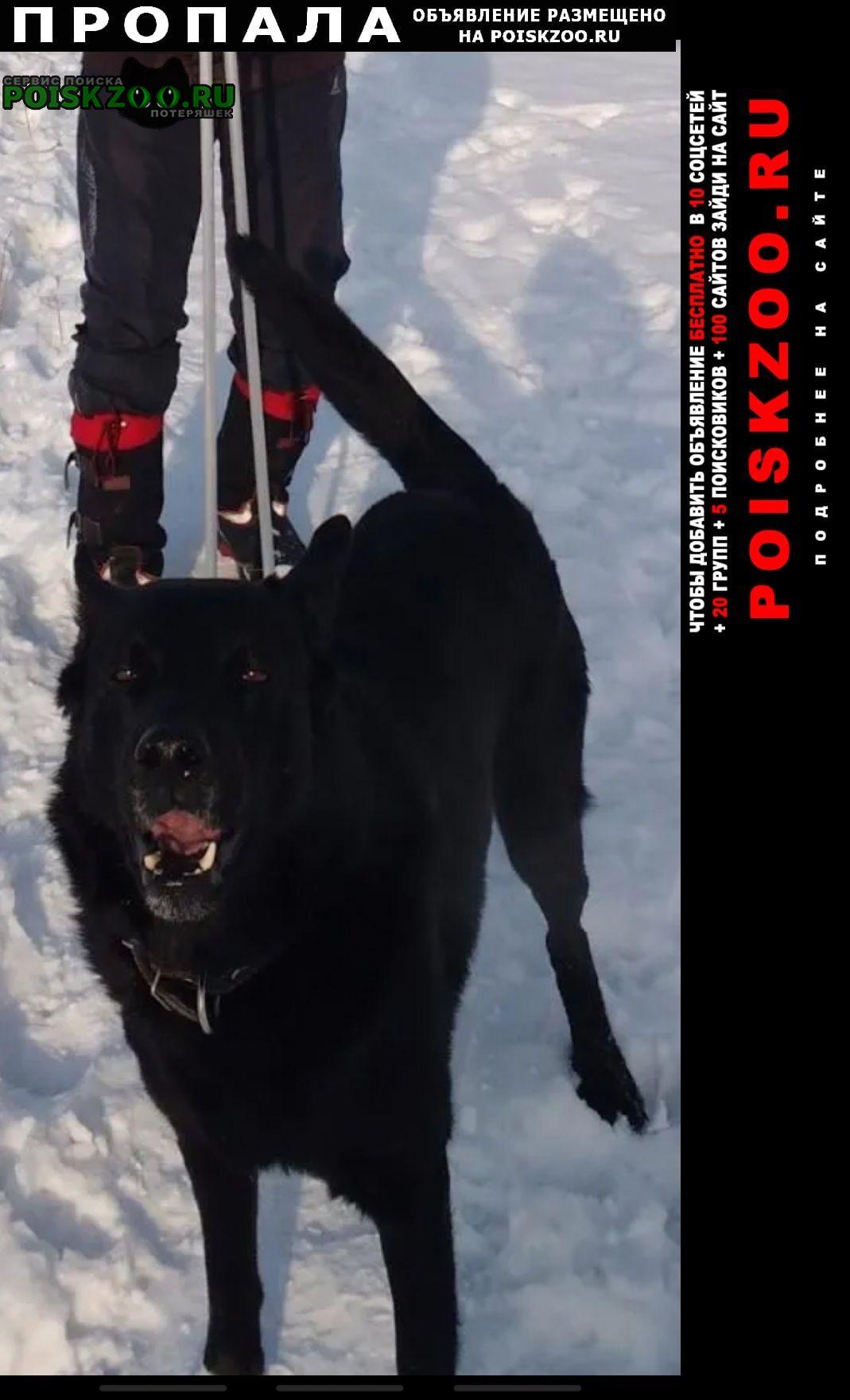 Пропала собака Хабаровск