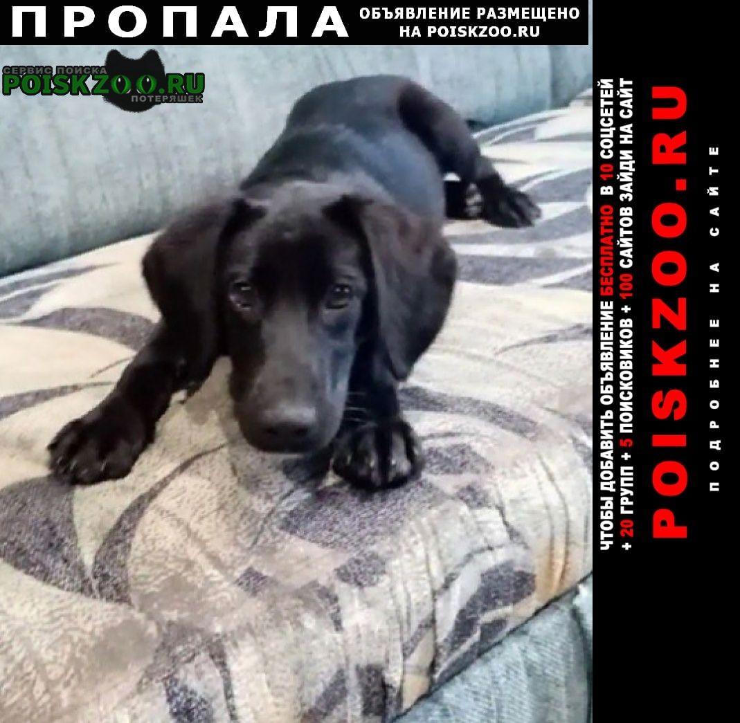 Пропала собака кличка белла.6 мес.добрая и ласко Кемерово