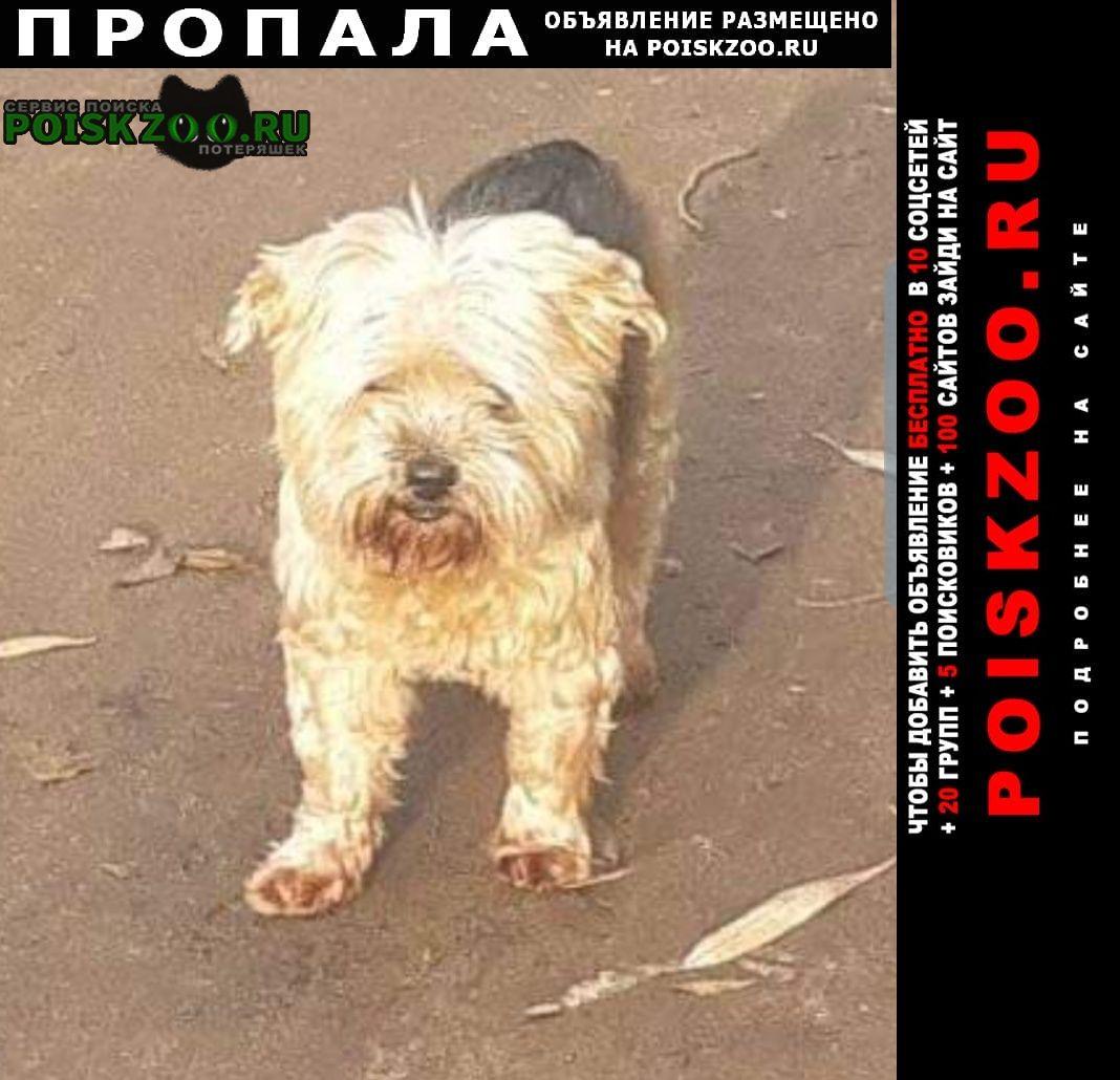 Пропала собака йокширский терьер, 13 лет. Москва