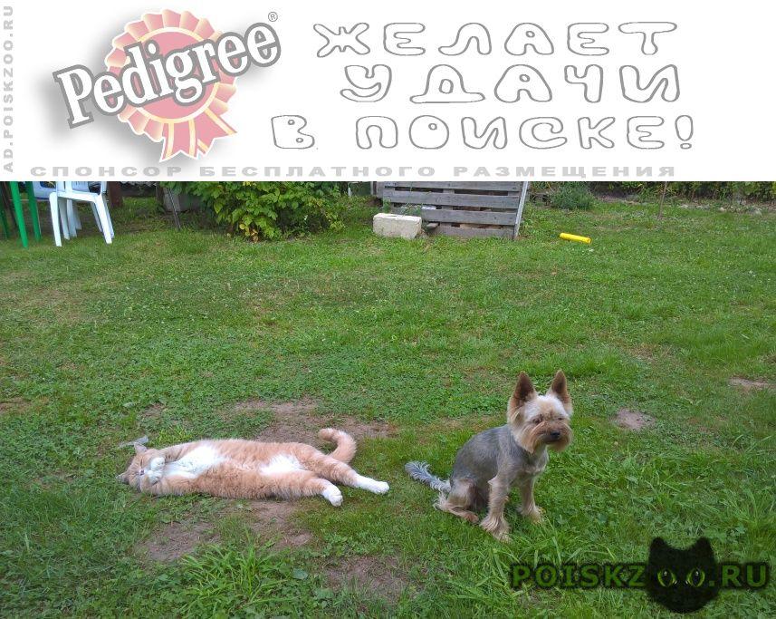 Пропала собака кобель г.Калуга