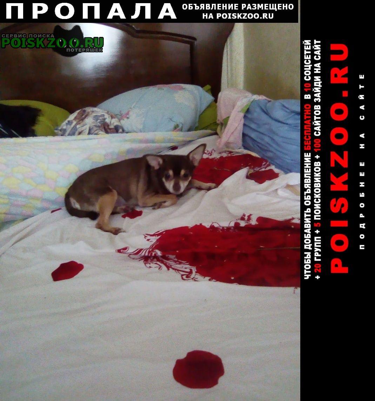 Пропала собака Икряное