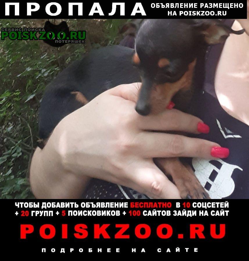 Пропала собака той терьер девочка Кропоткин
