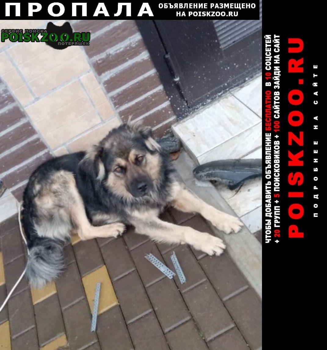 Красногорск Пропала собака