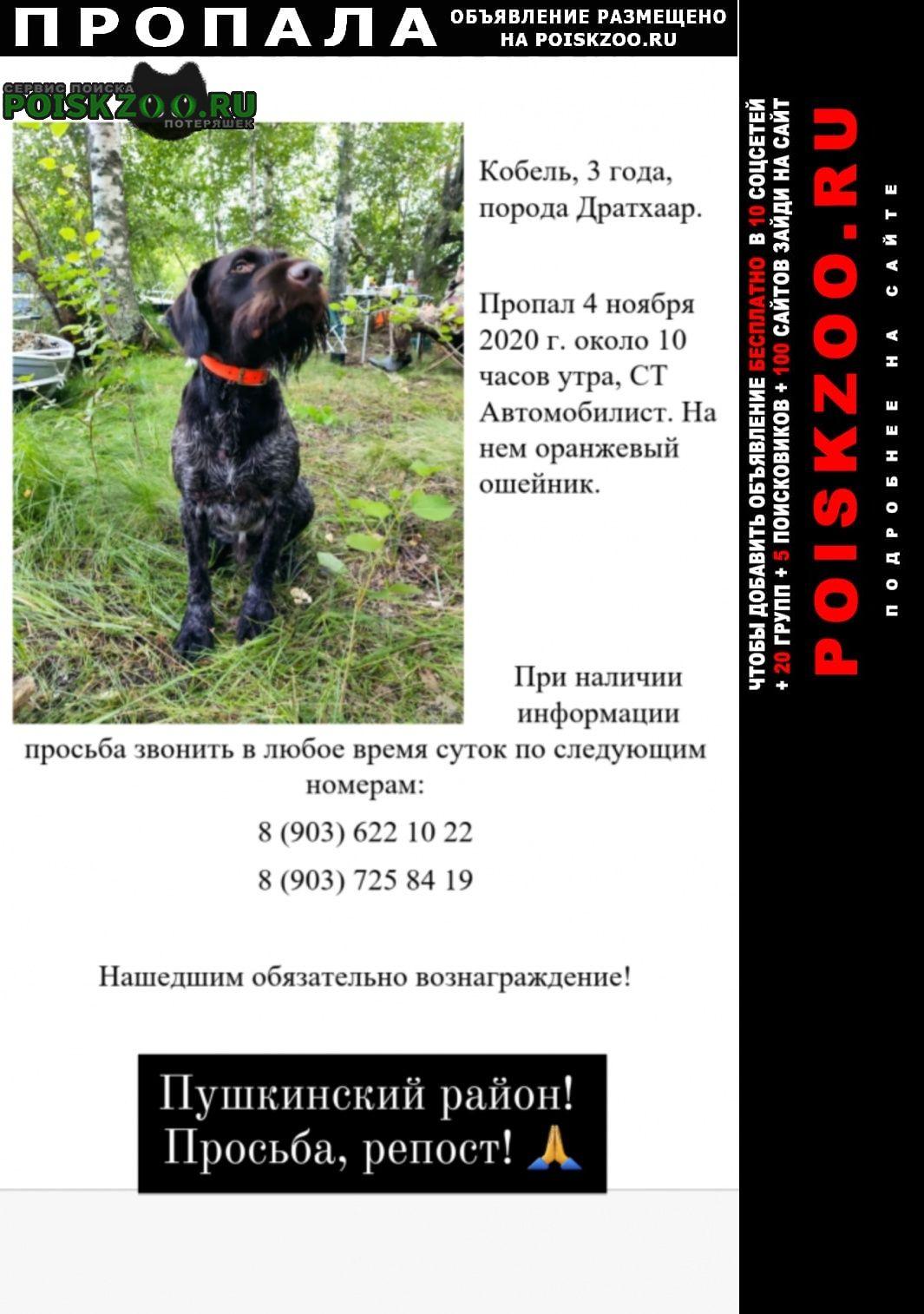 Пушкино Пропала собака