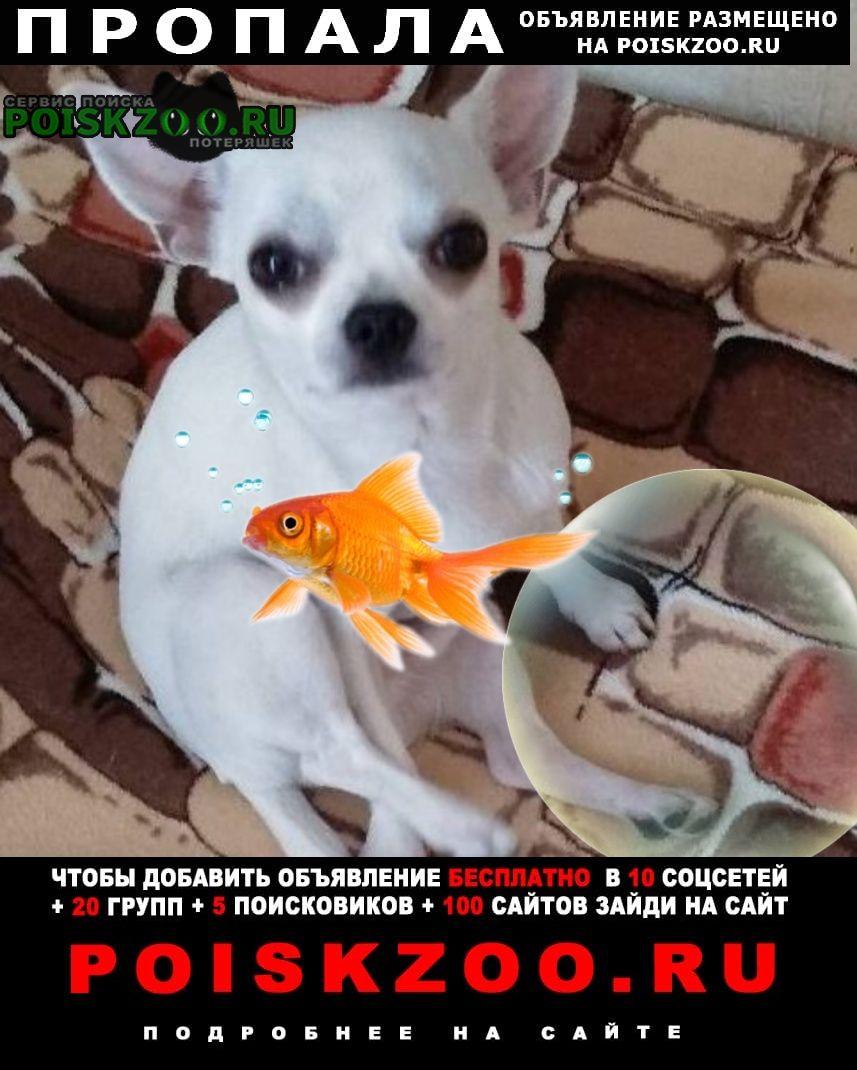 Пропала собака помогите найти Брянск