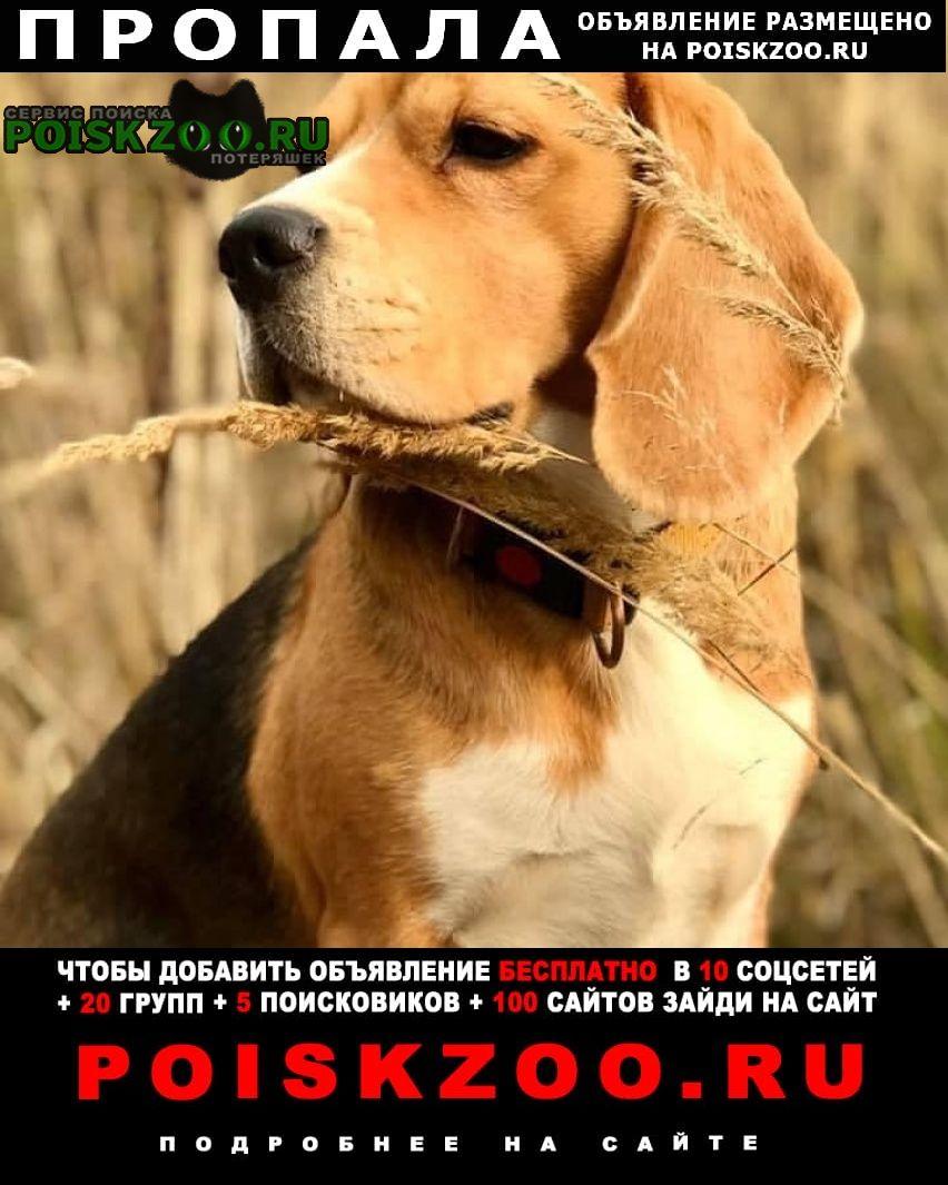 Ростов Пропала собака ярославская область.