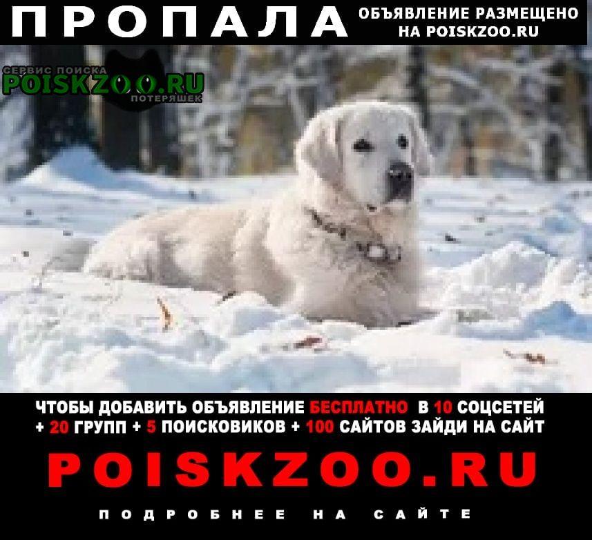 Пропала собака Ухта