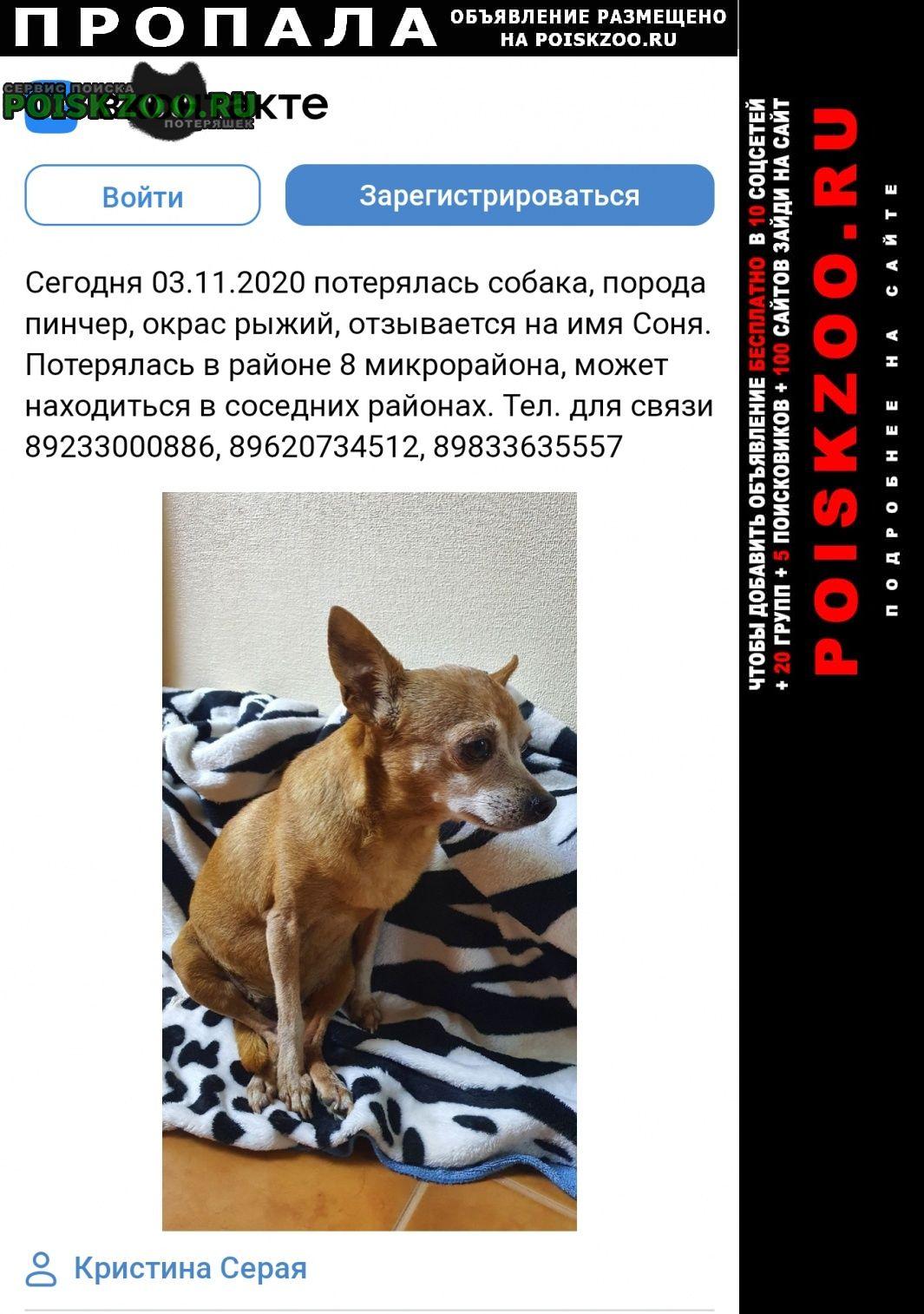 Пропала собака вознагрождение Ачинск