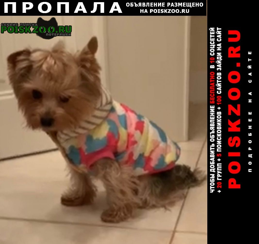 Пропала собака Тучково