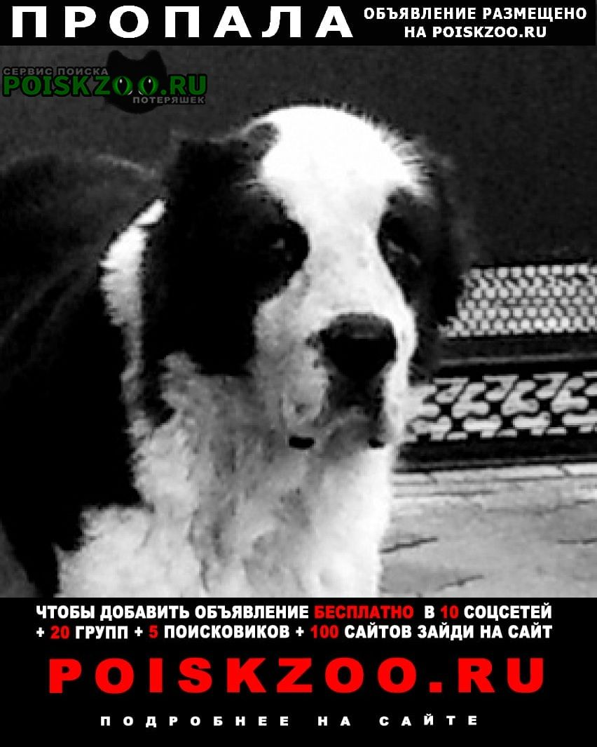 Пропала собака кобель алабай чёрный с белой вставкой Ейск