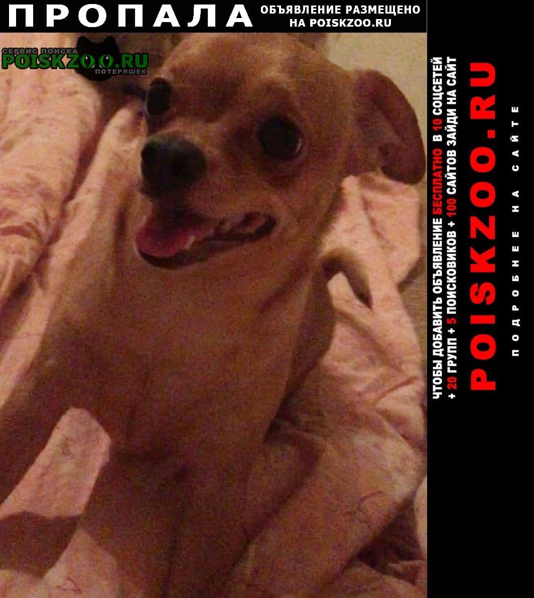 Пропала собака помогите пожалуйста Донецк Донецкая обл.