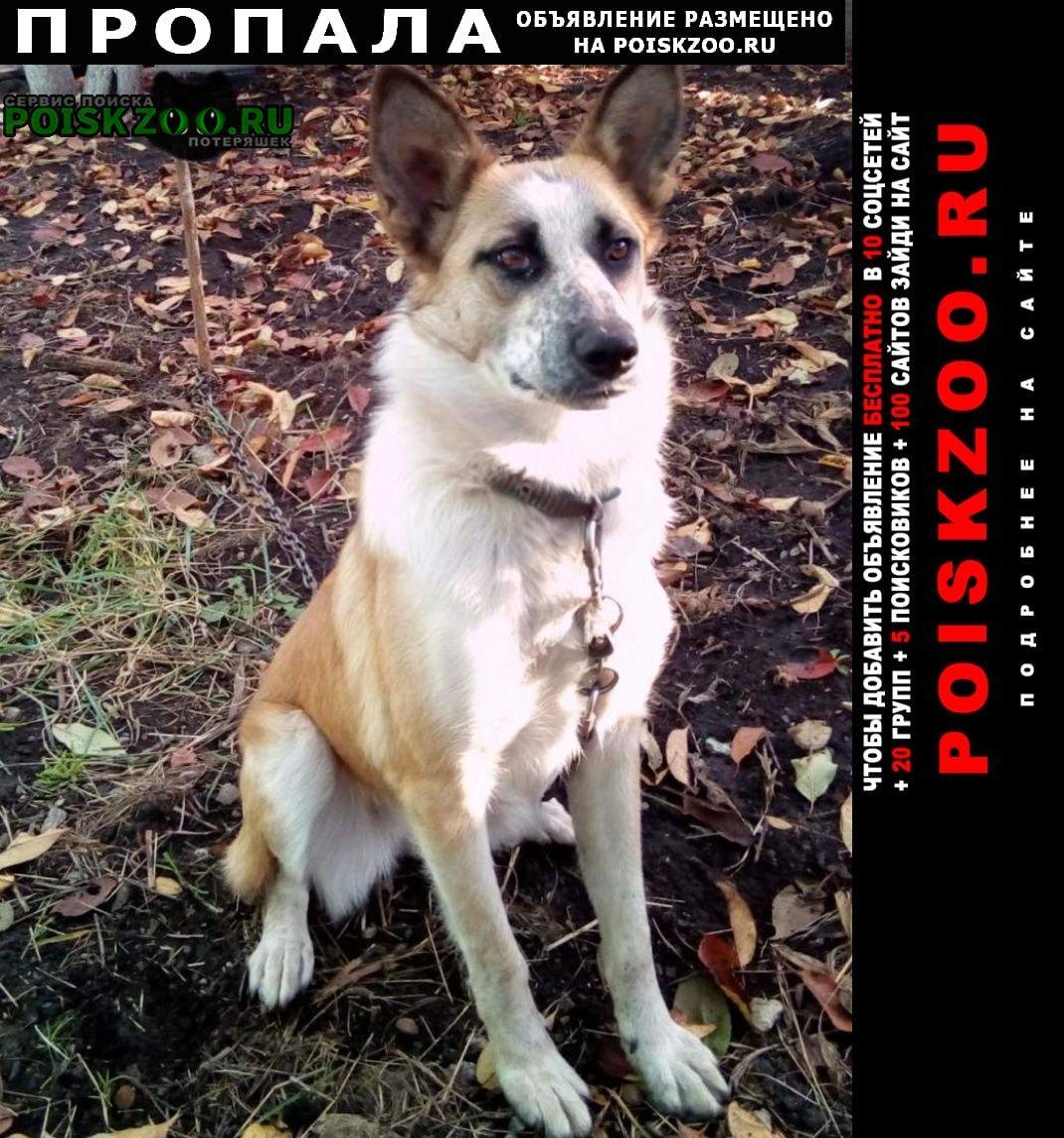 Белгород Пропала собака помогите найти еву