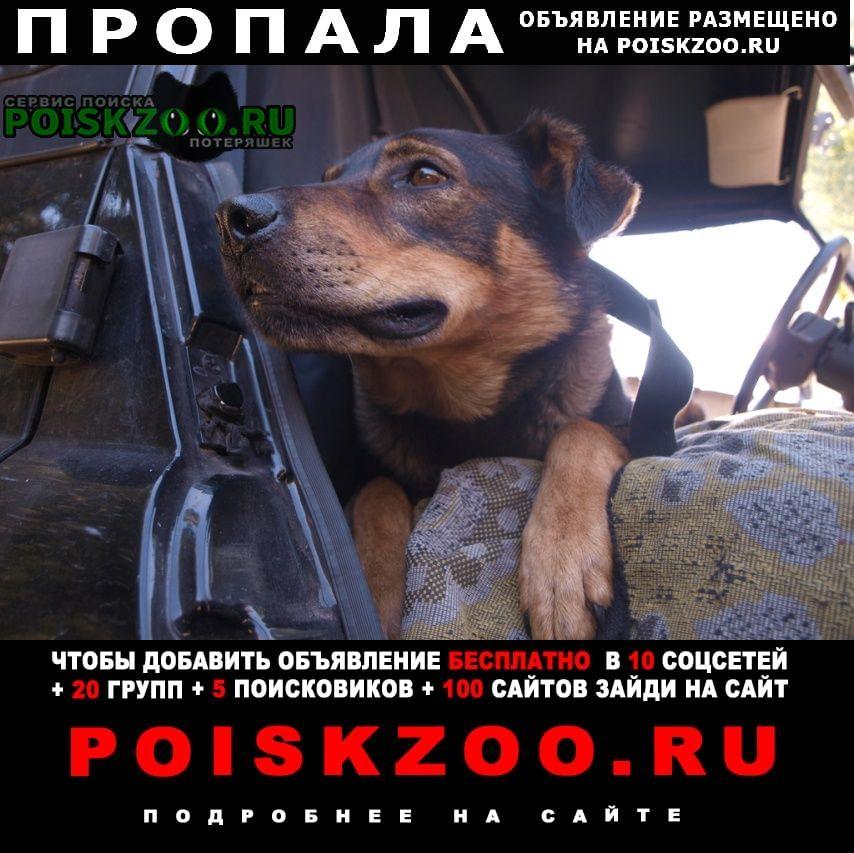 Пропала собака Волчанск Харьковская обл.