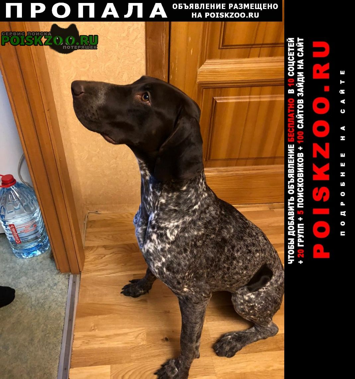 Пропала собака курцхаар Москва