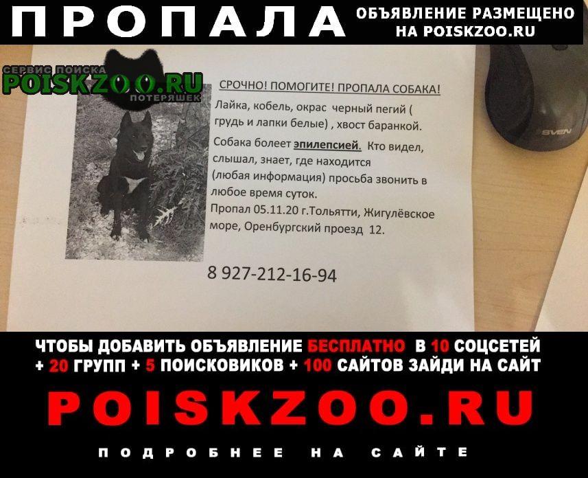 Пропала собака помогите пожалуйста найти собаку Тольятти