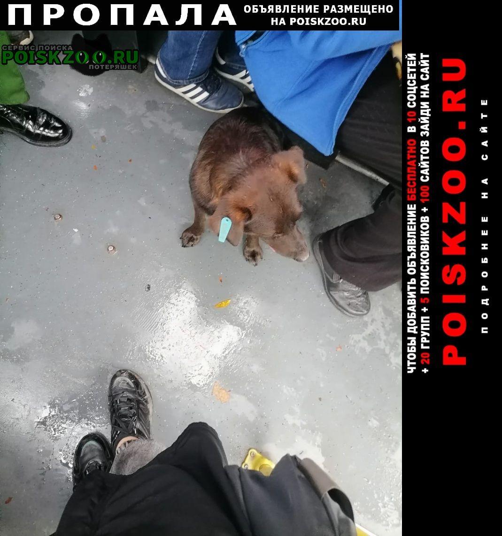Аксай (Ростовская обл.) Пропала собака помогите пожалуйста