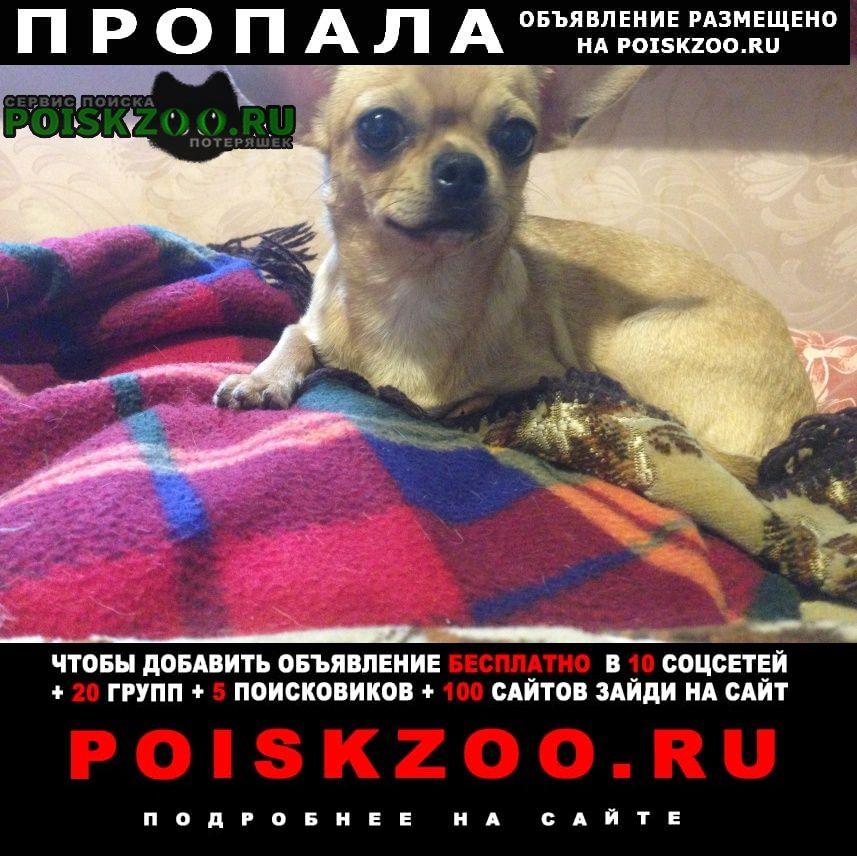 Пропала собака чихуахуа миник Ярославль