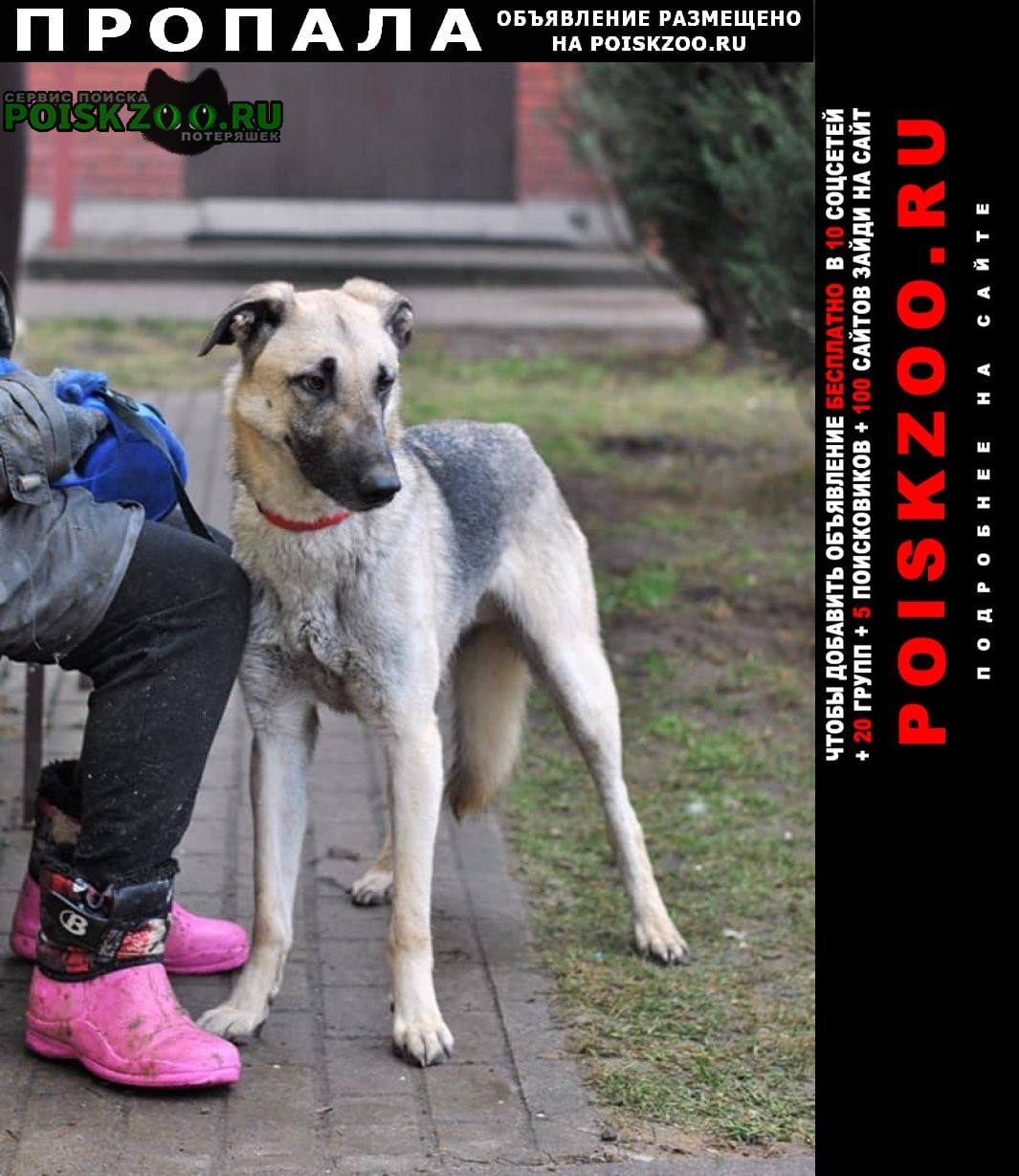 Владивосток Пропала собака
