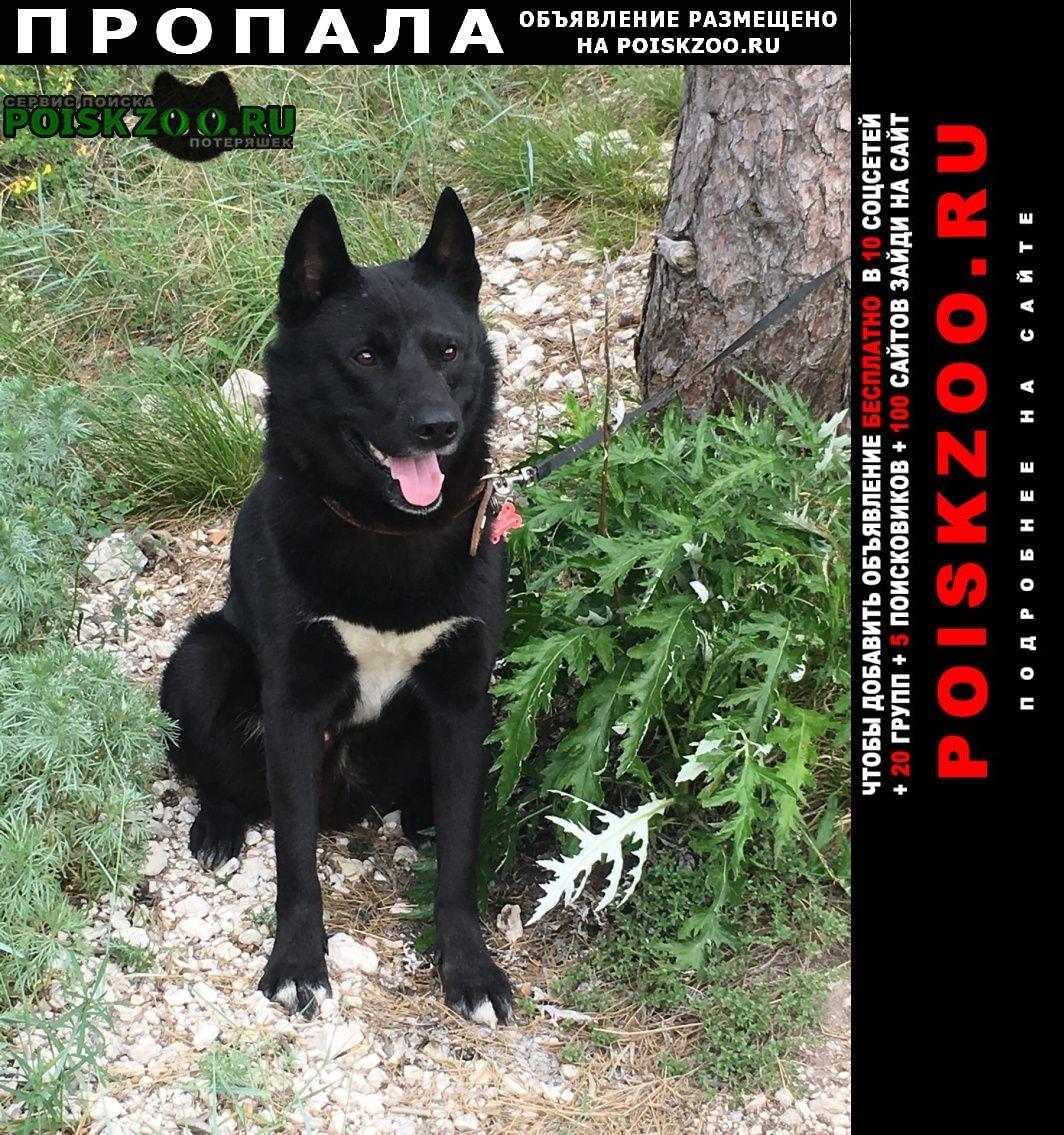 Тольятти Пропала собака