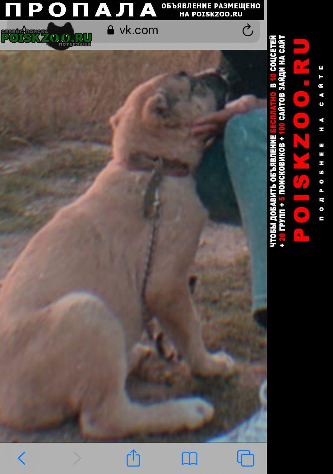 Пропала собака зовут аза Армавир