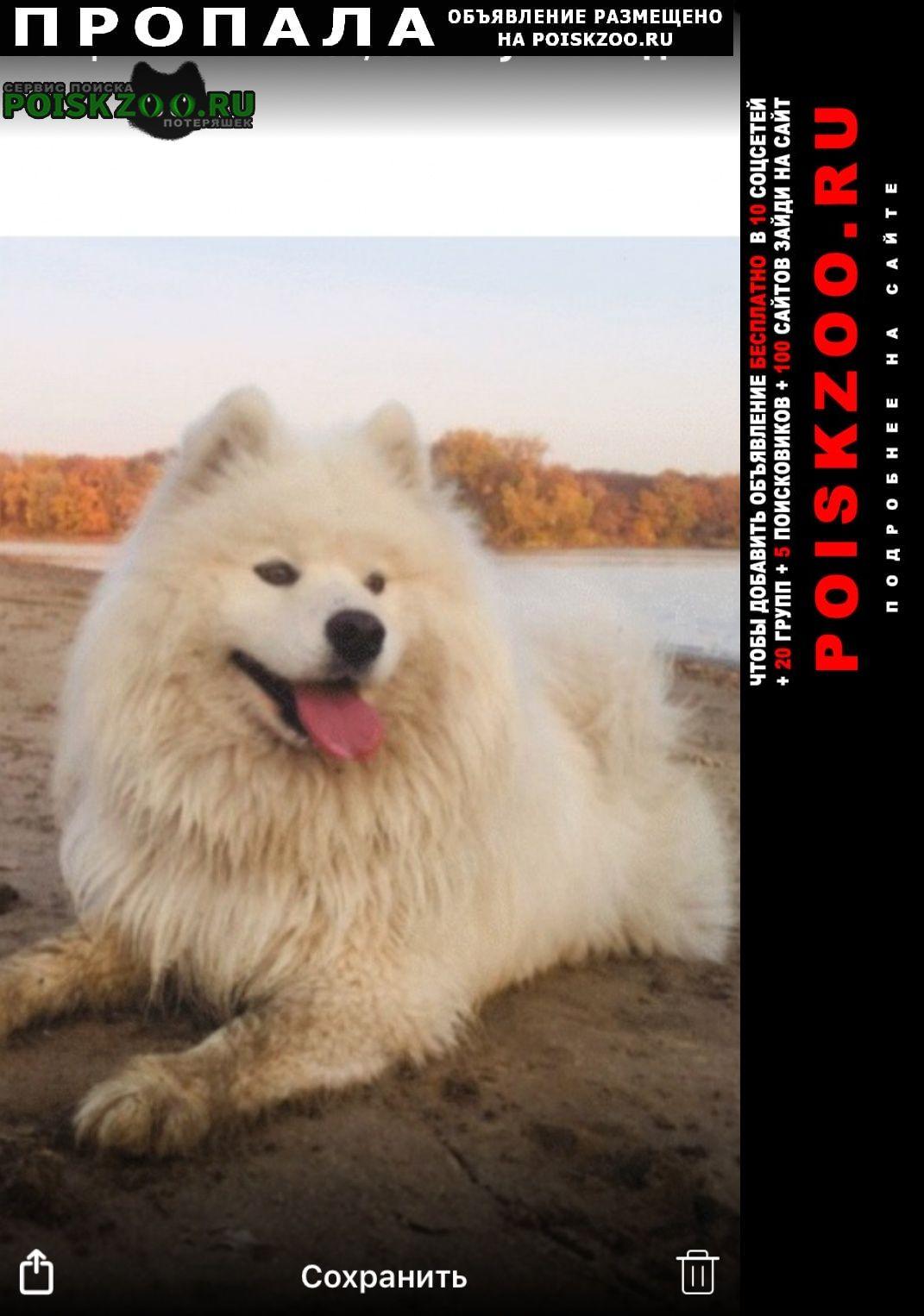 Пропала собака Димитровград