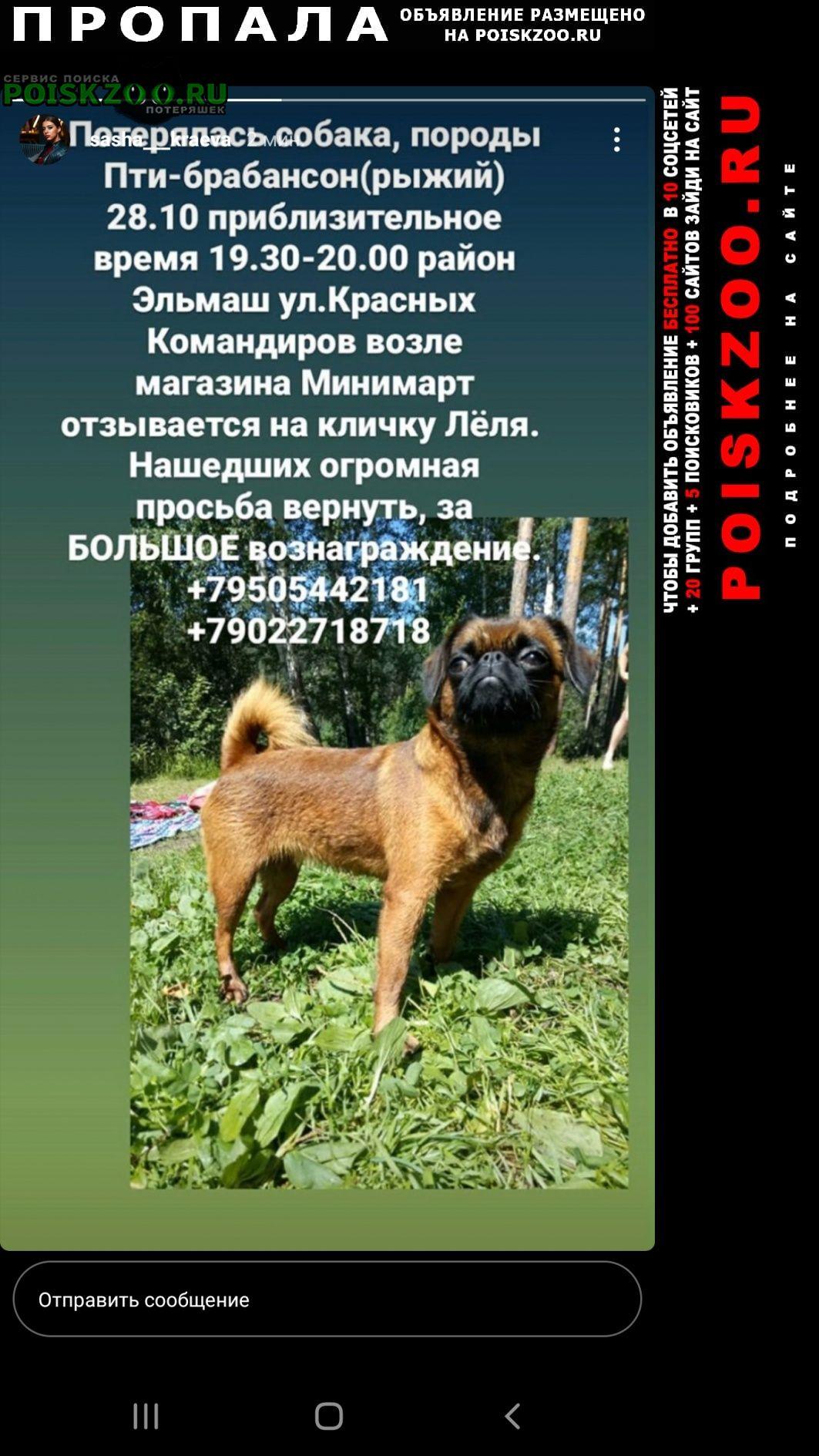 Пропала собака пти-барбансон Екатеринбург
