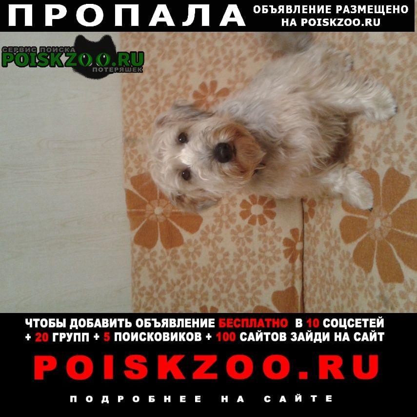 Пропала собака.. Белгород