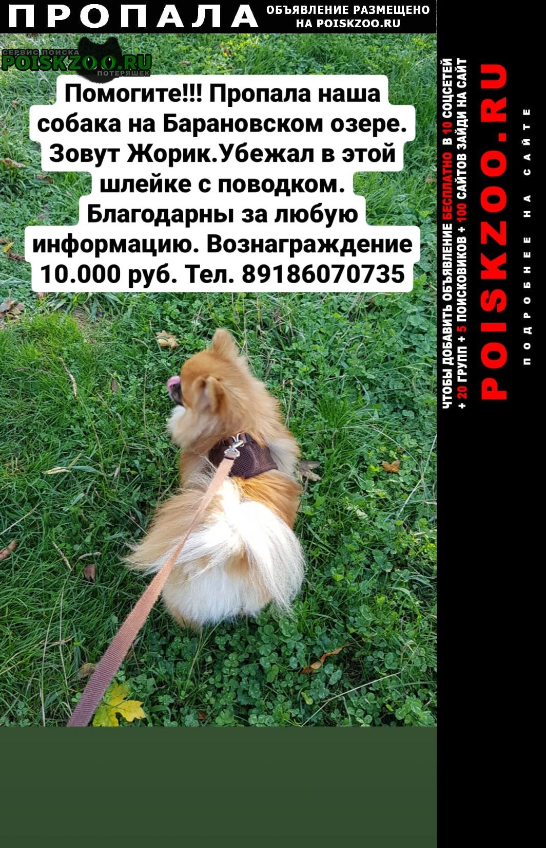 Сочи Пропала собака помогите