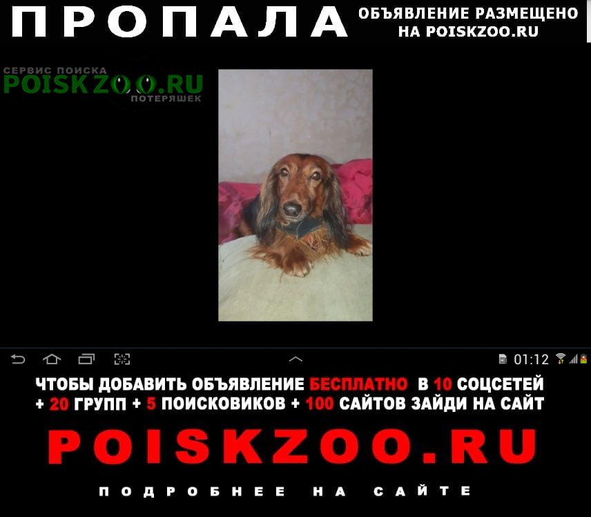 Москва Пропала собака ищем собаку.