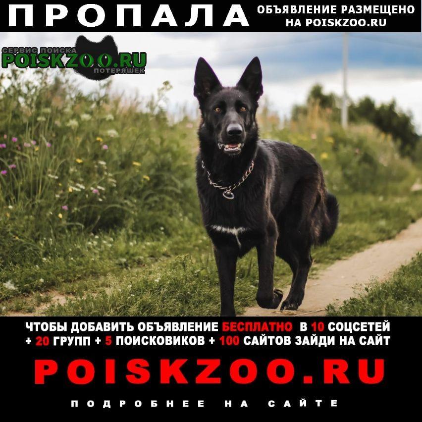 Звенигород Пропала собака помогите найти собаку