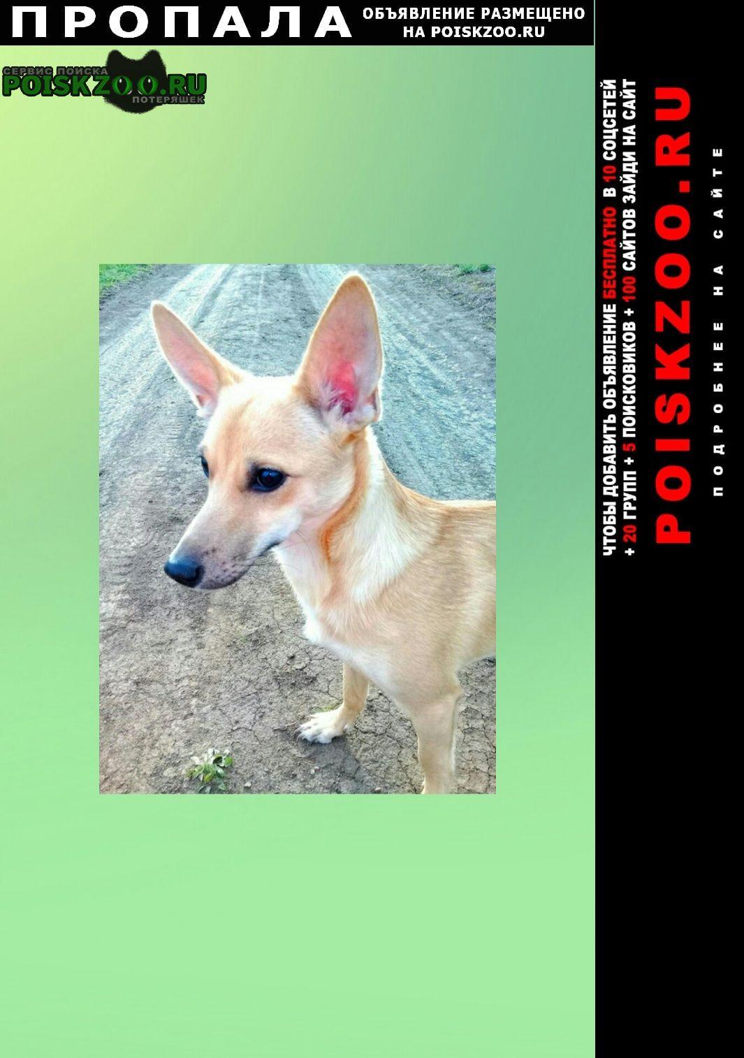 Пропала собака срочно линда Оренбург