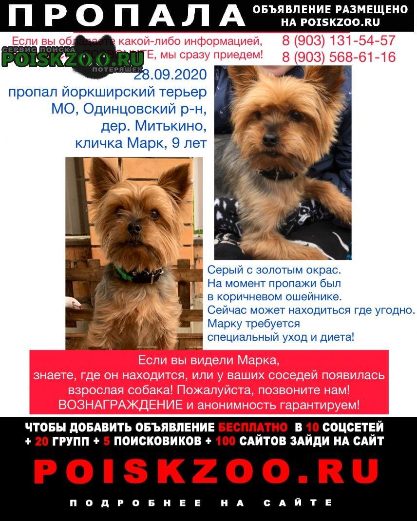Пропала собака Краснознаменск (Московская обл.)
