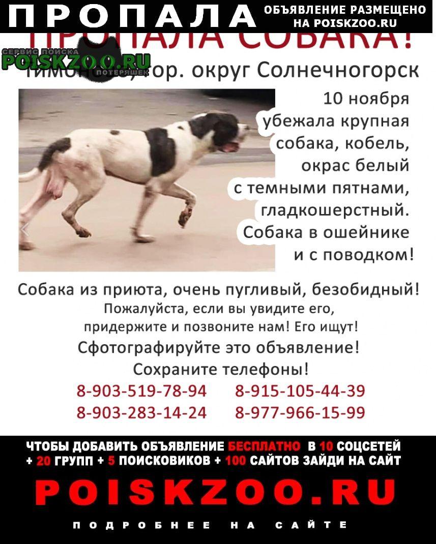 Солнечногорск Пропала собака