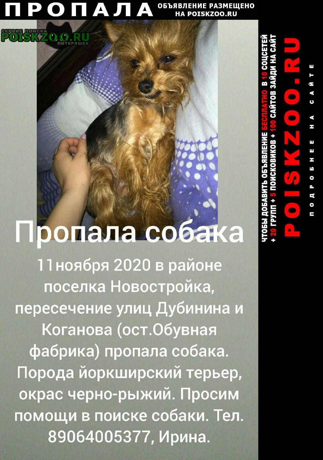 Пропала собака йоркширский терьер Волгоград