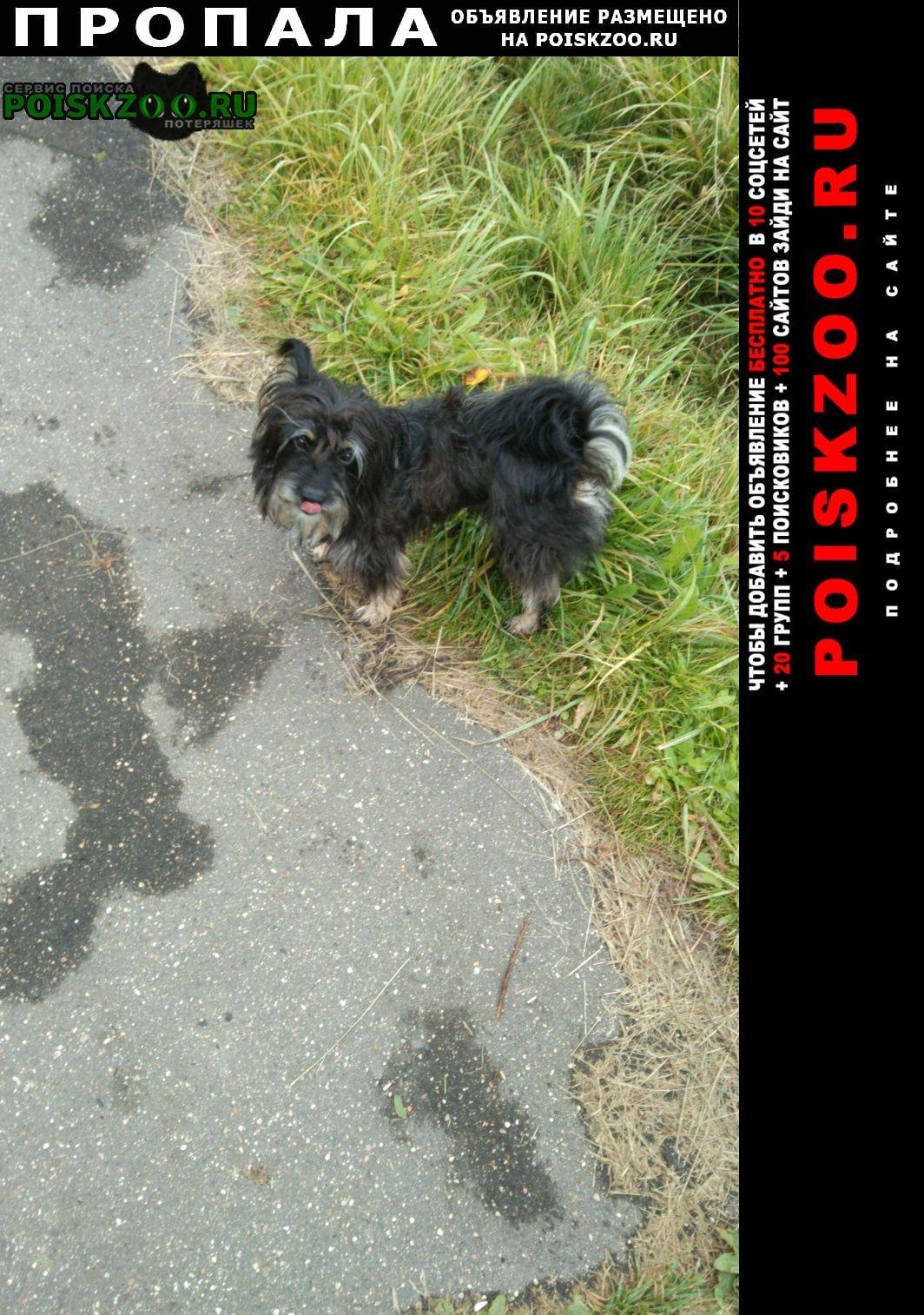 Пропала собака Волоколамск