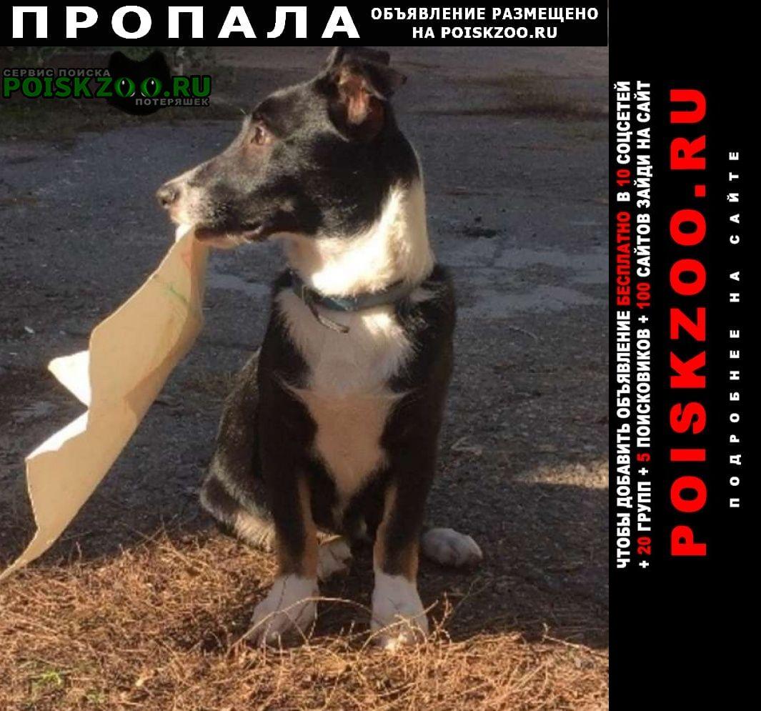 Пропала собака Николаев Николаевская обл.