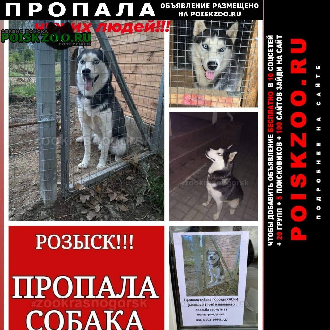 Пропала собака Нахабино
