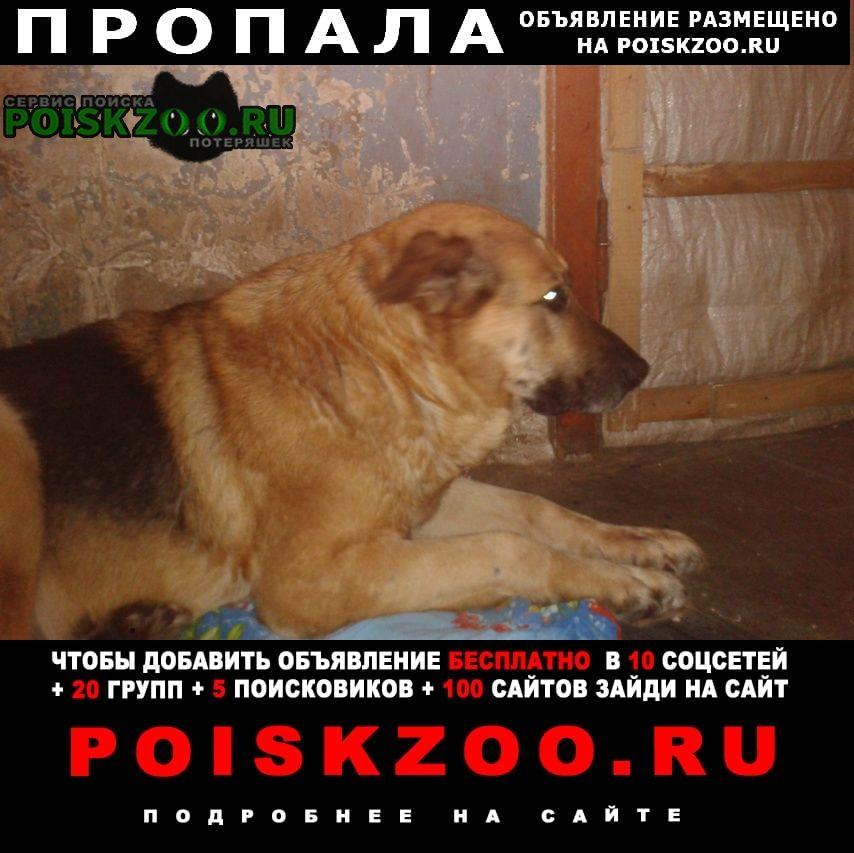 Саранск Пропала собака кобель пёс кличка тайсон.