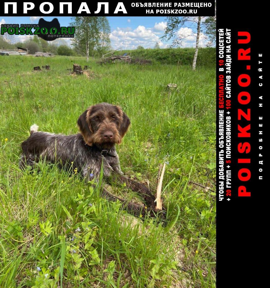 Пропала собака дратхаар Ильинское-Хованское
