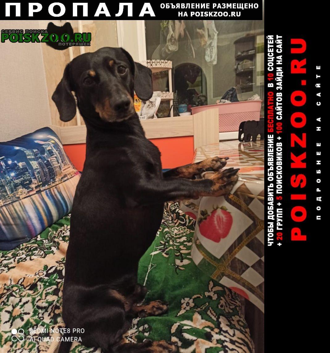 Артем Пропала собака такса помогите пожалуйста