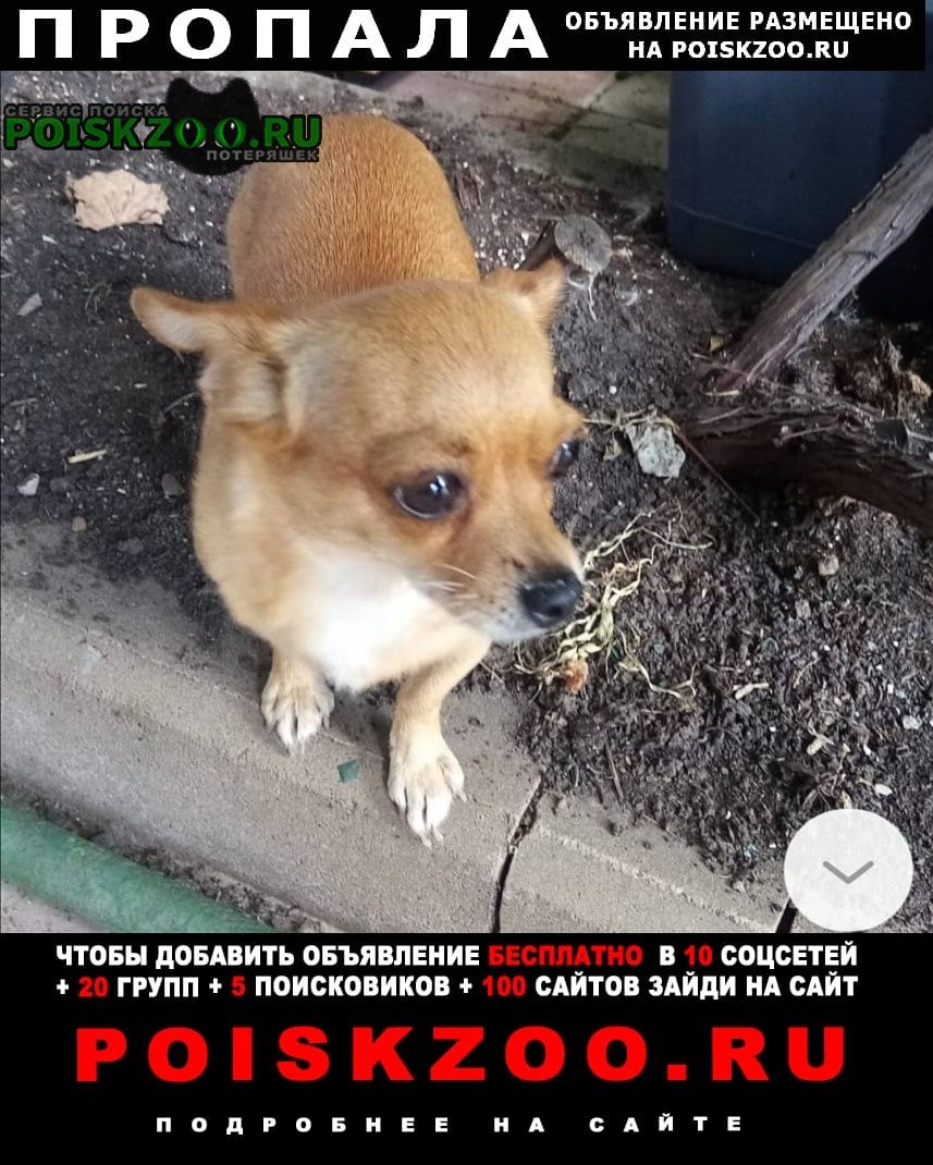 Пропала собака погите найти Тамбов