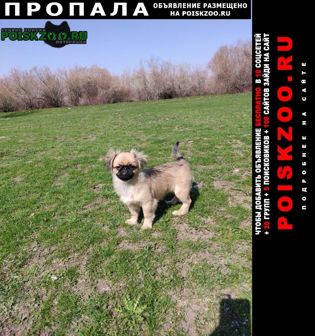Пропала собака любимая игрушка Шымкент (Чимкент)