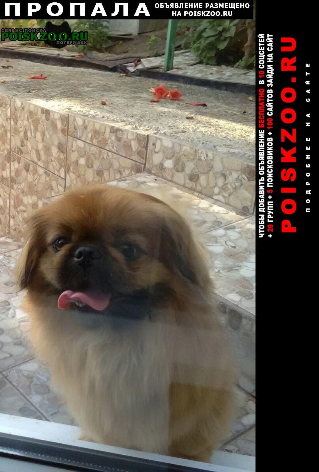 Пропала собака, хутор николаенко Апшеронск