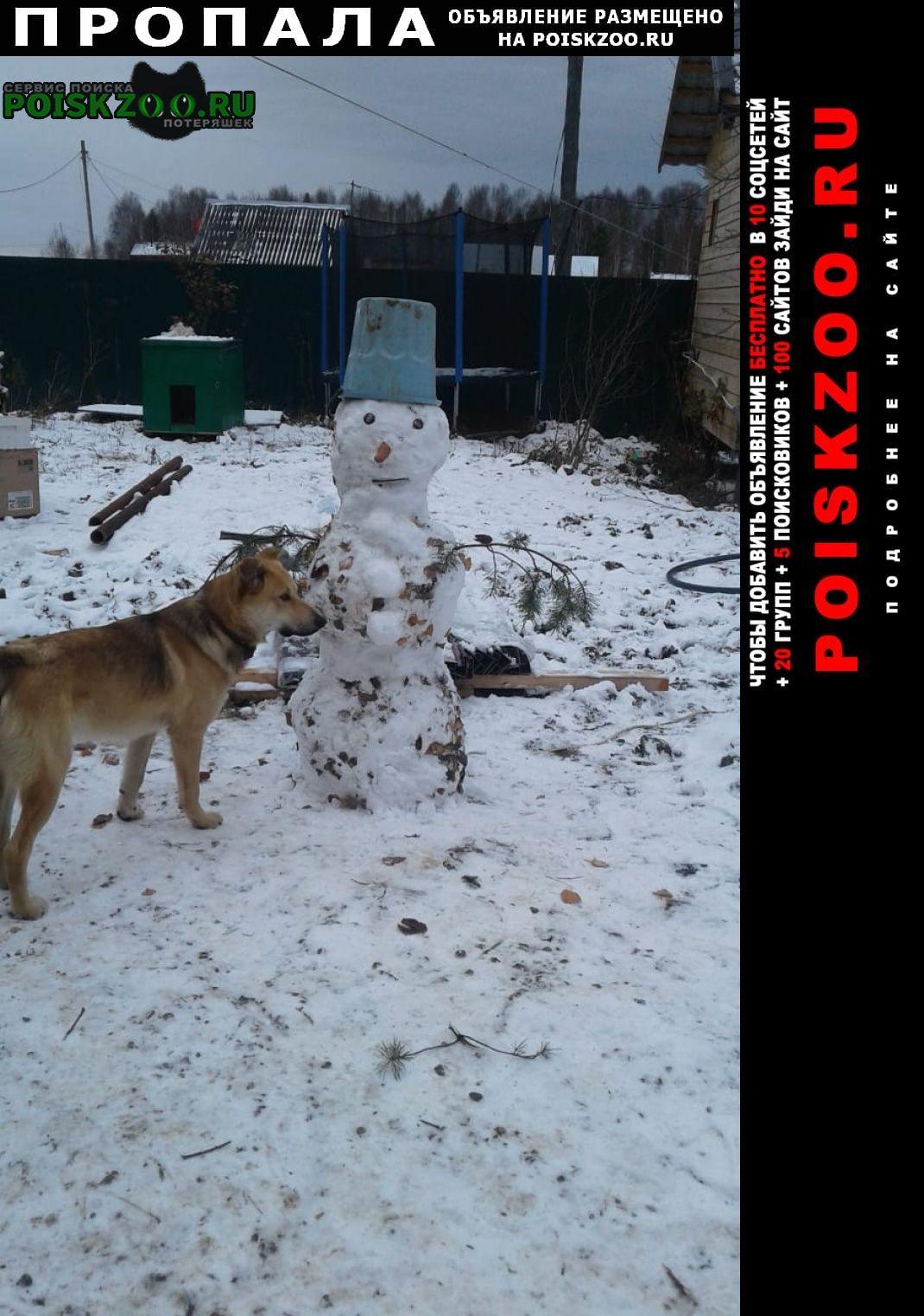 Пропала собака кобель около года Верхняя Пышма