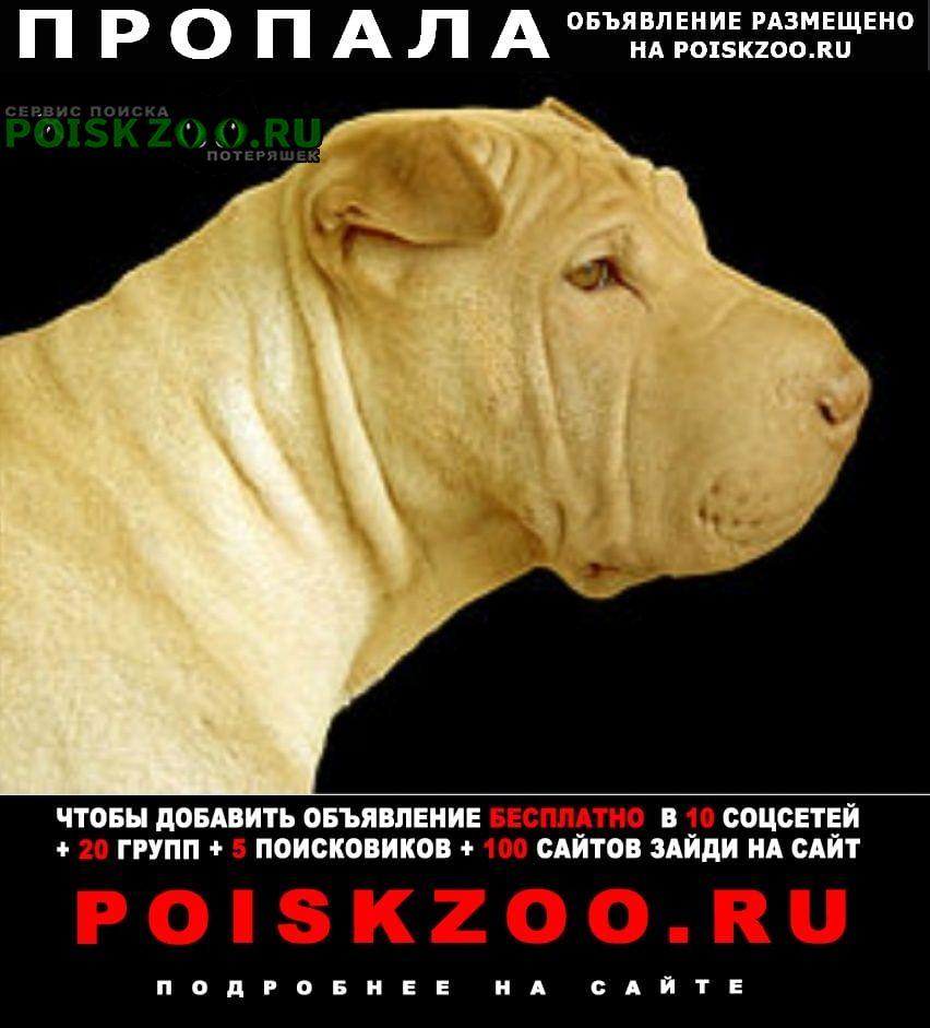 Якутск Пропала собака