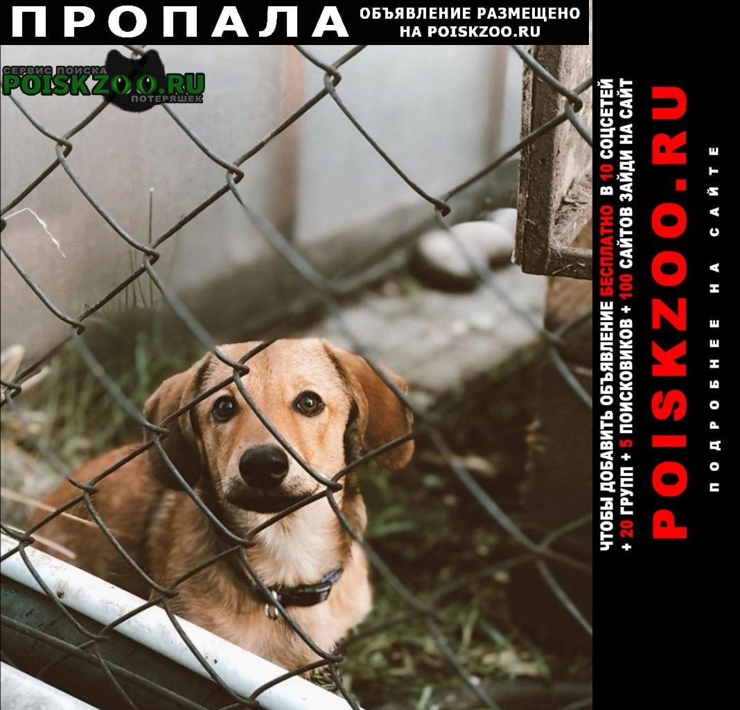 Пропала собака Саяногорск