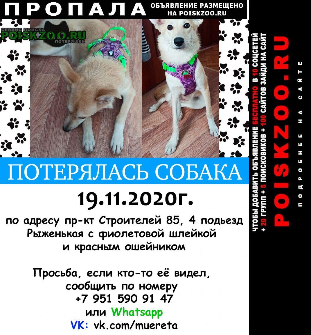 Пропала собака Прокопьевск